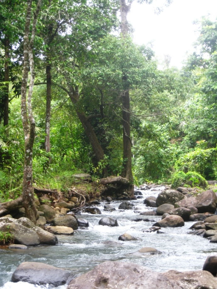 Sungai diatas curug