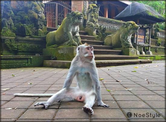 monkey galau