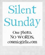 Silent-Sunday