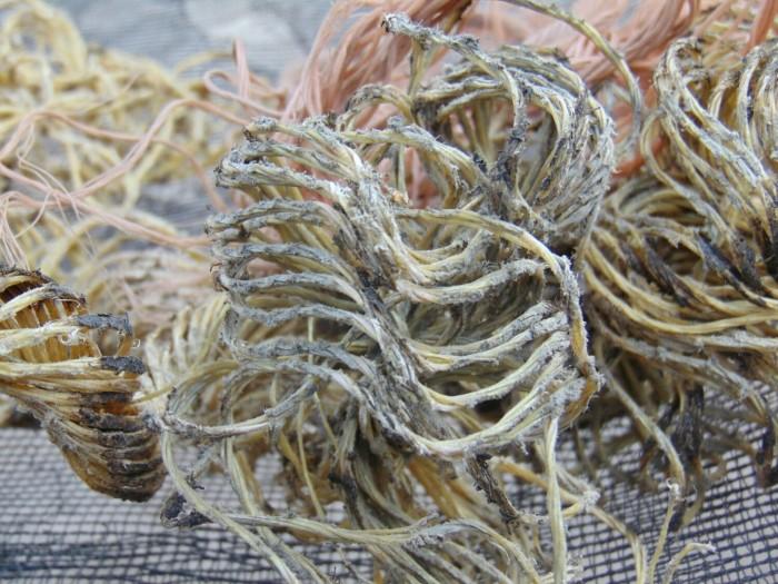 broken ropes.jpg